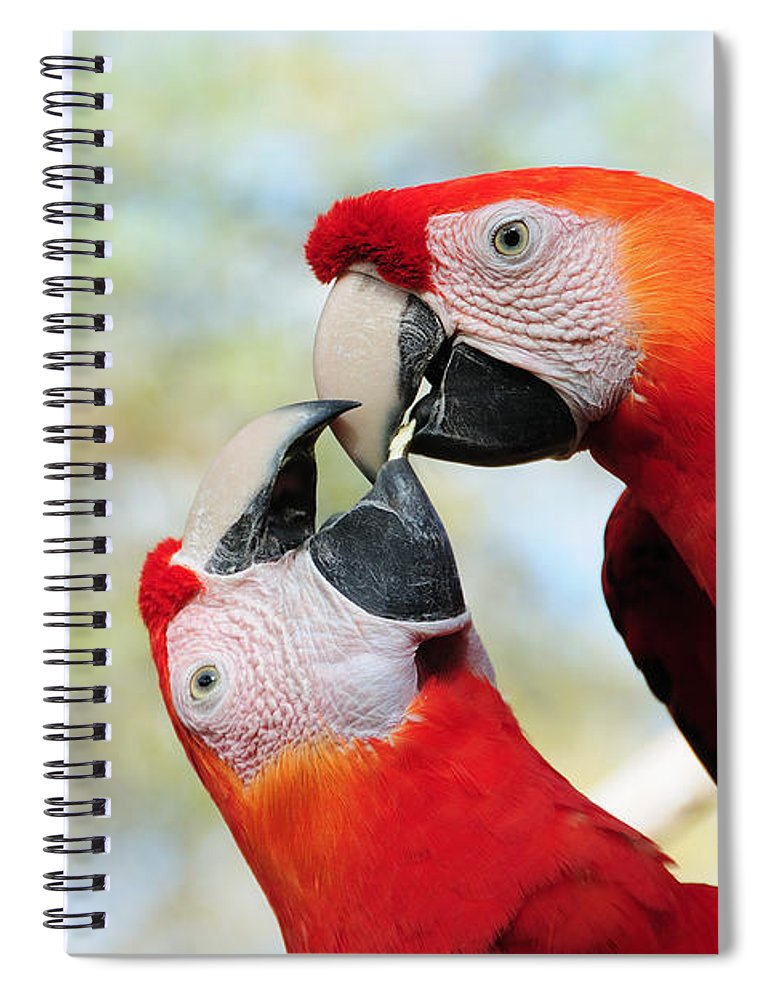 Bird Spiral Notebook featuring the photograph Macaws by Steven Sparks