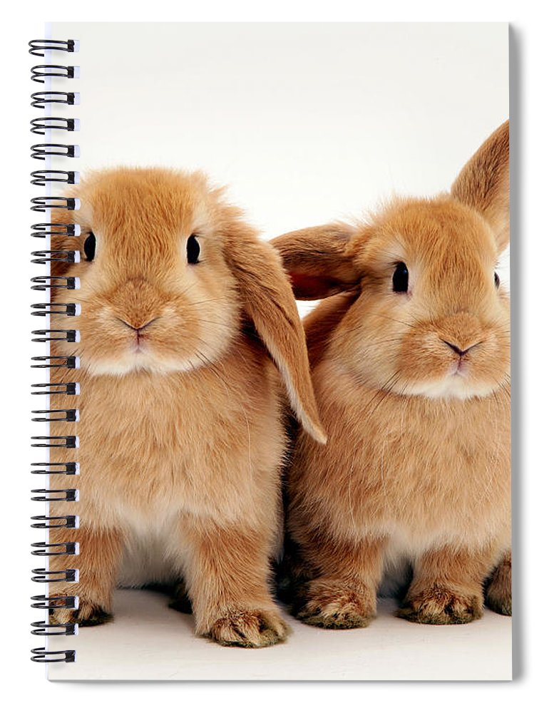 Animal Spiral Notebook featuring the photograph Sandy Lop Rabbits by Jane Burton