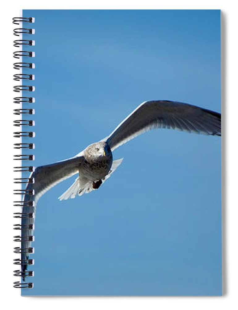 Seagull Spiral Notebook featuring the photograph Seagull In Flight by Steven Natanson