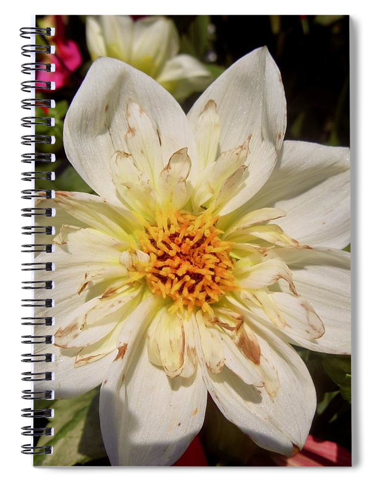 Flower Spiral Notebook featuring the photograph White Flower by Stephanie Moore