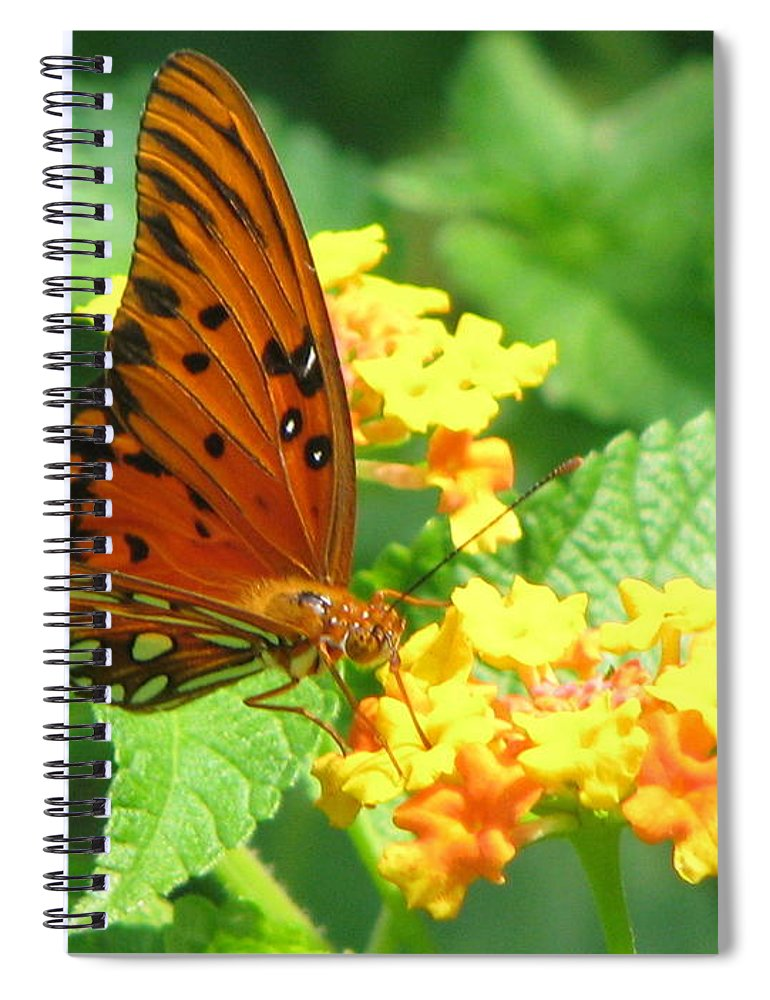 Butterfly Spiral Notebook featuring the photograph Butterfly by Amanda Barcon