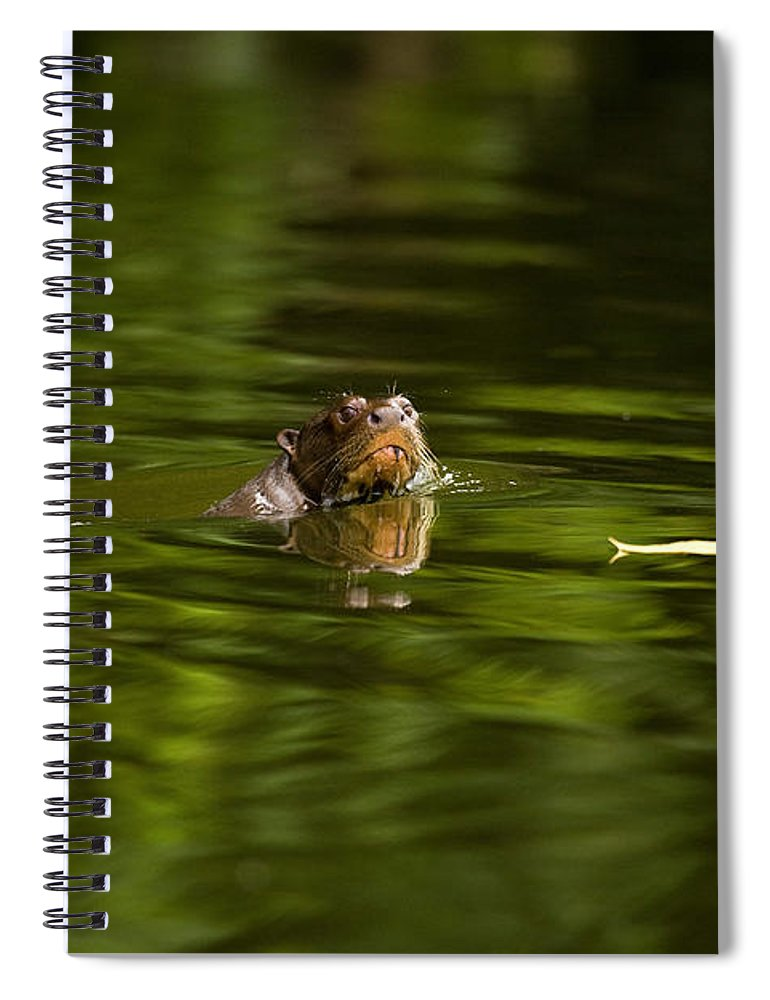 Adult Spiral Notebook featuring the photograph Giant Otter Pteronura Brasiliensis by Gerard Lacz