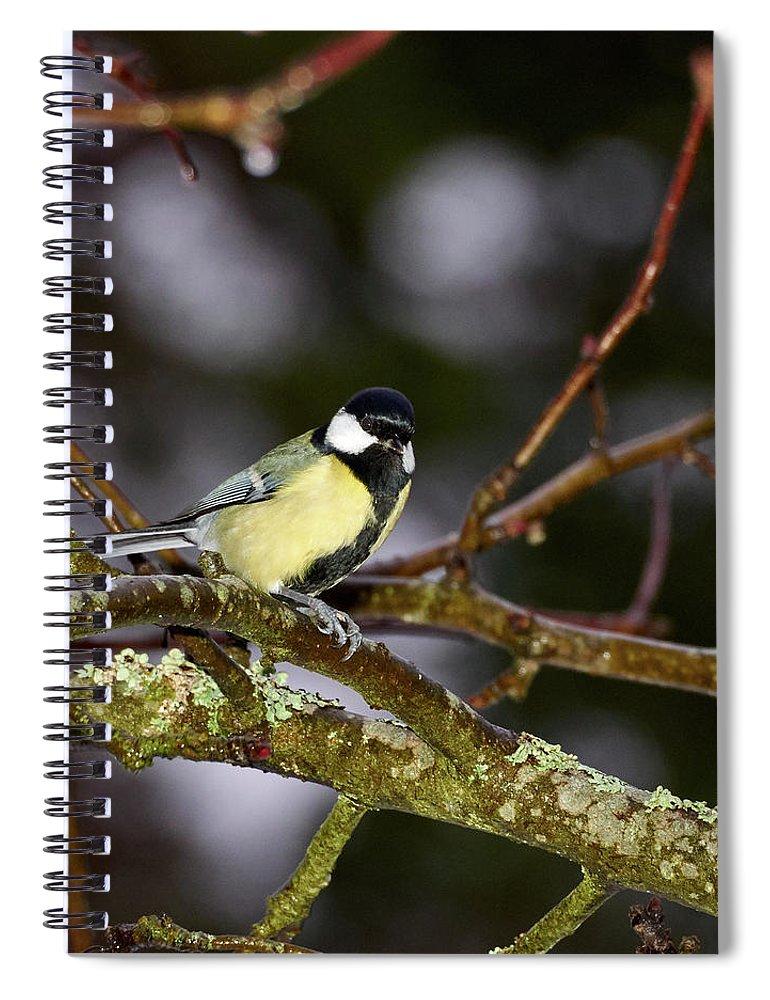 Lehtokukka Spiral Notebook featuring the photograph Great Tit by Jouko Lehto
