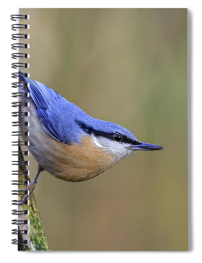 Animal Spiral Notebook featuring the photograph Nuthatch -- by Chris Smith