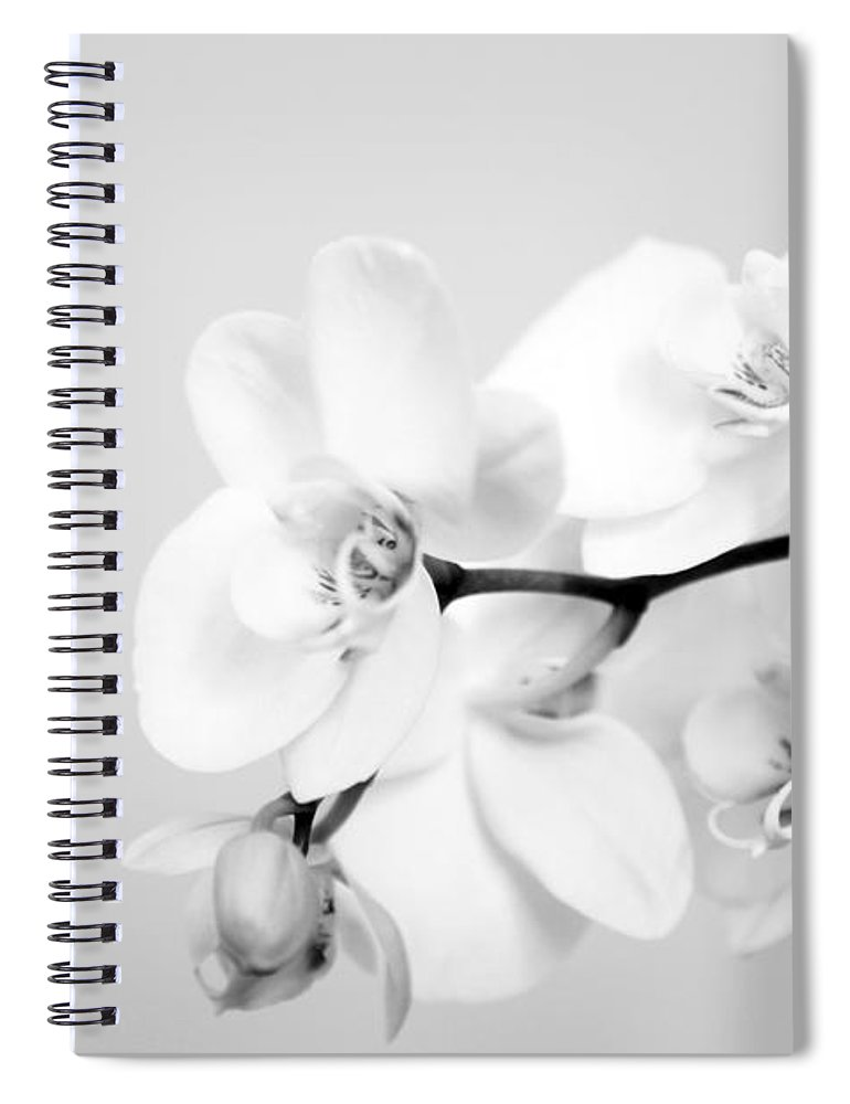 Orchid Spiral Notebook featuring the photograph Orchid by Amanda Barcon