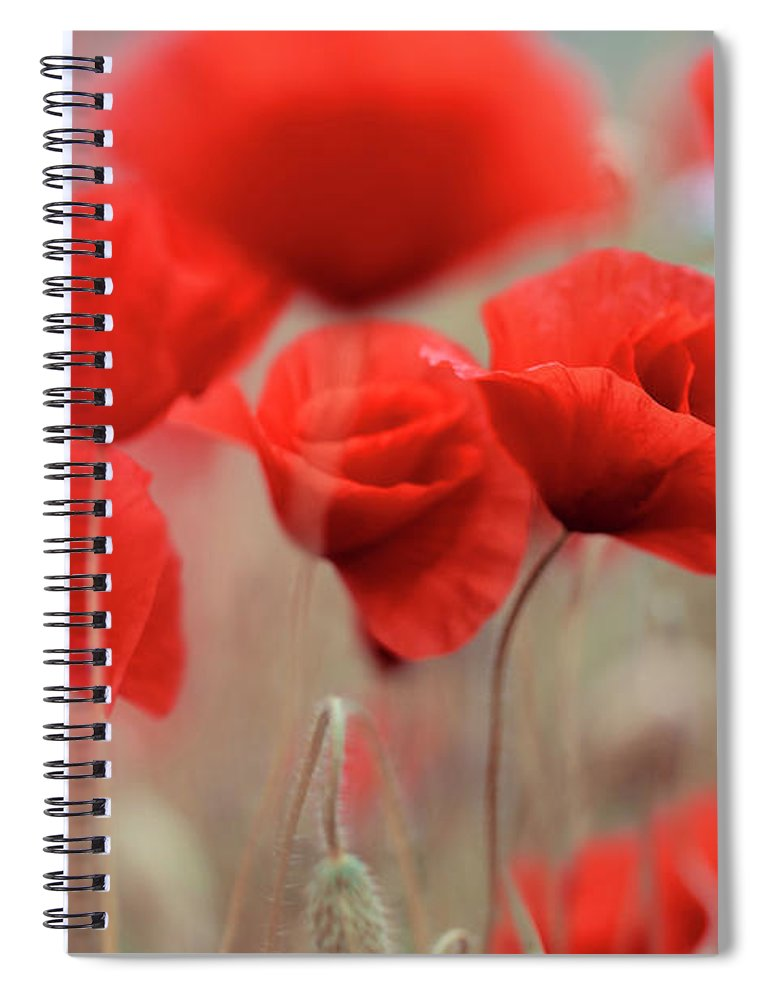 Poppy Spiral Notebook featuring the photograph Summer Poppy Meadow by Nailia Schwarz