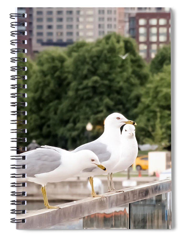 3 Seagulls In A Row Spiral Notebook featuring the photograph 3 Seagulls In A Row by Cynthia Woods