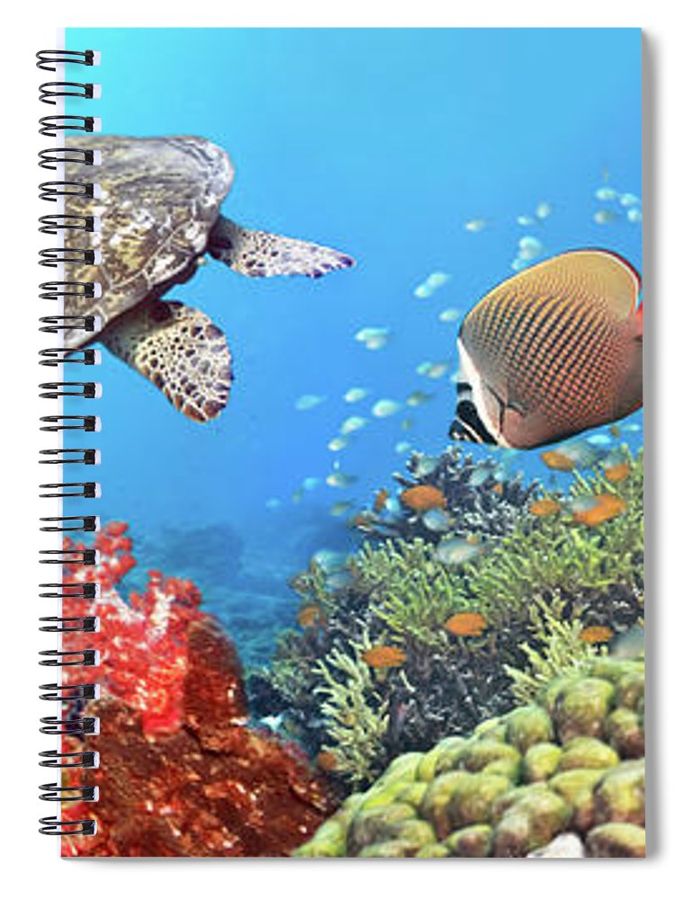 Butterflyfish Spiral Notebook featuring the photograph Underwater Panorama 4 by MotHaiBaPhoto Prints