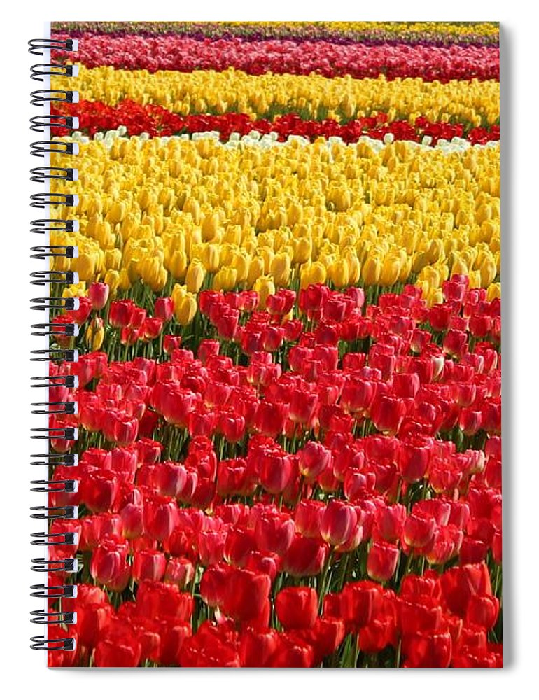 Tulip Spiral Notebook featuring the photograph Tulip by Sherri Keene