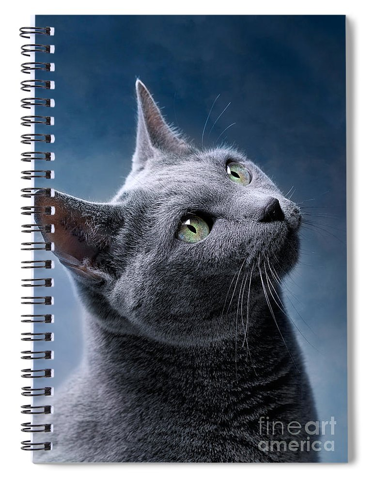 Russian Spiral Notebook featuring the photograph Russian Blue Cat by Nailia Schwarz