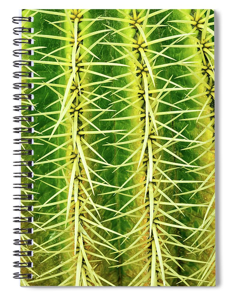 Cactus Spiral Notebook featuring the photograph Abstract Cactus by Delphimages Photo Creations