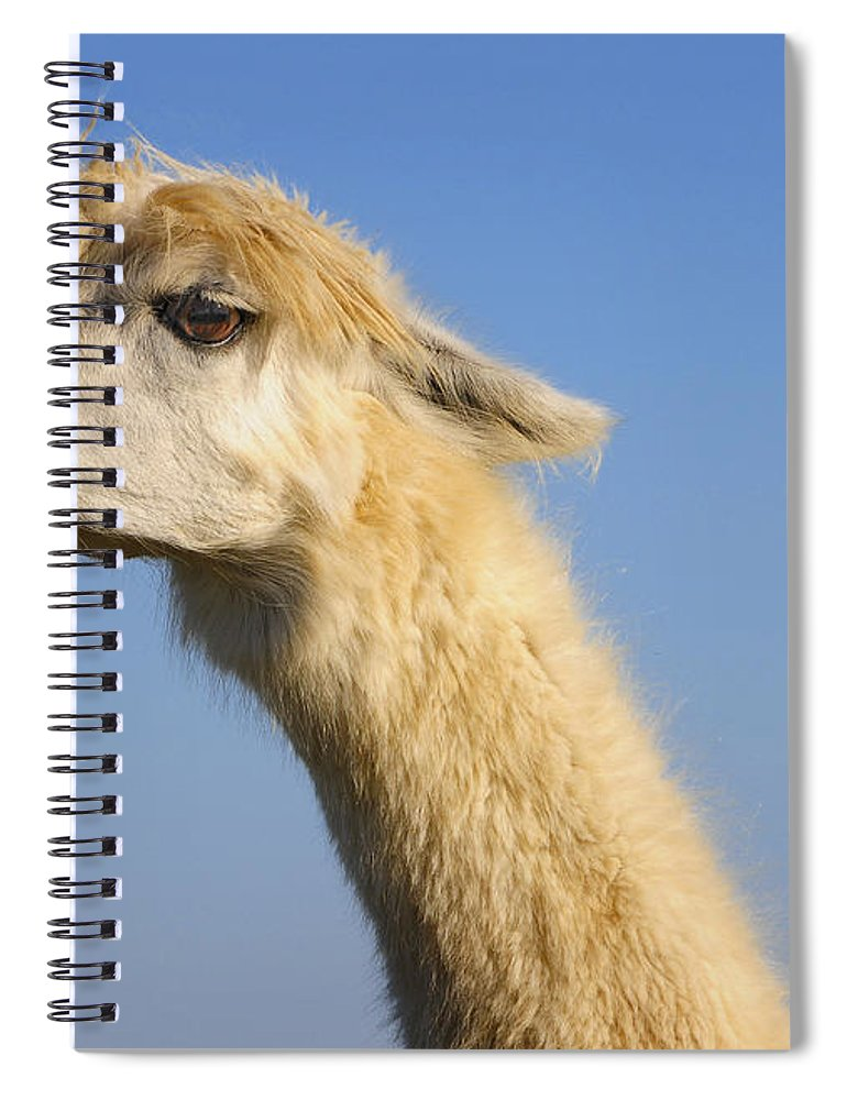 Skip Hunt Spiral Notebook featuring the photograph Alpaca by Skip Hunt