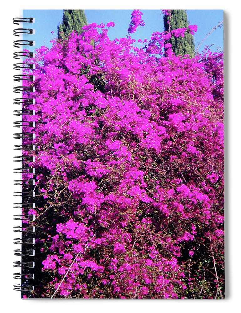 Amazing dark pink flower tree spiral notebook for sale by sofia pink flowers spiral notebook featuring the photograph amazing dark pink flower tree by sofia metal mightylinksfo