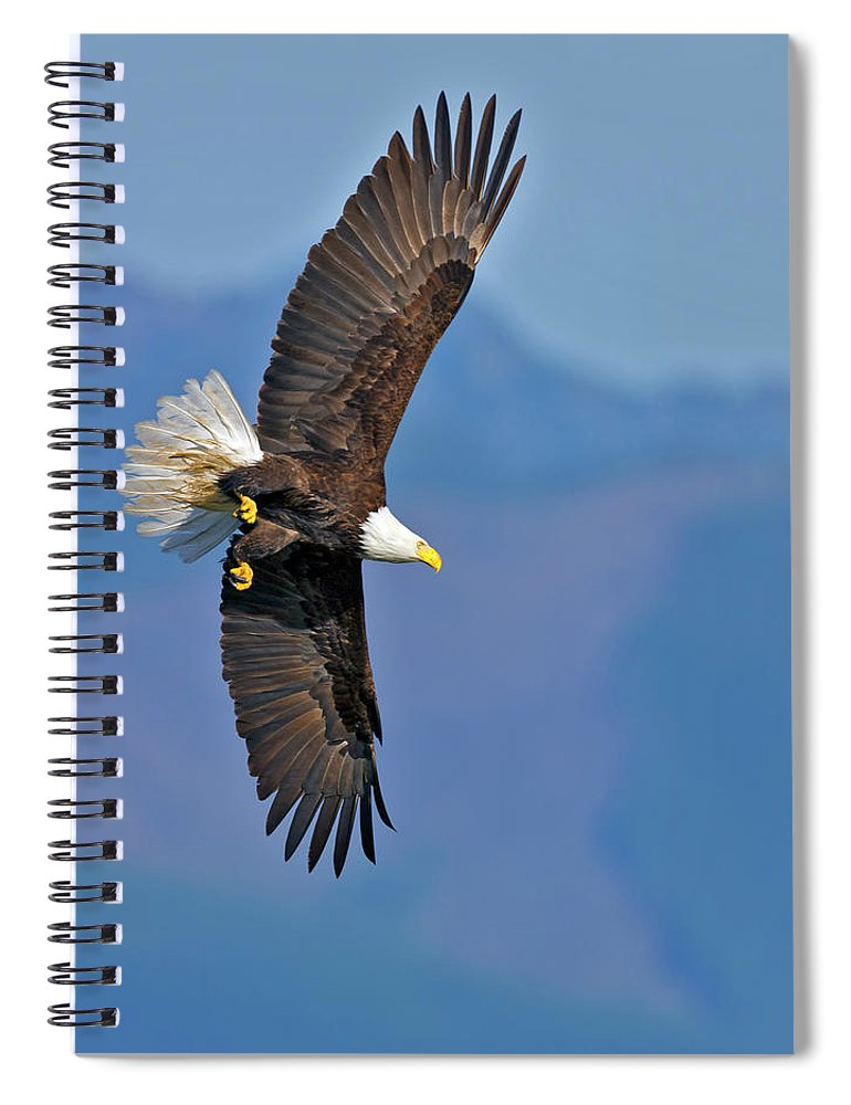 American Spiral Notebook featuring the photograph American Blad Eagle On The Wing by Gary Langley