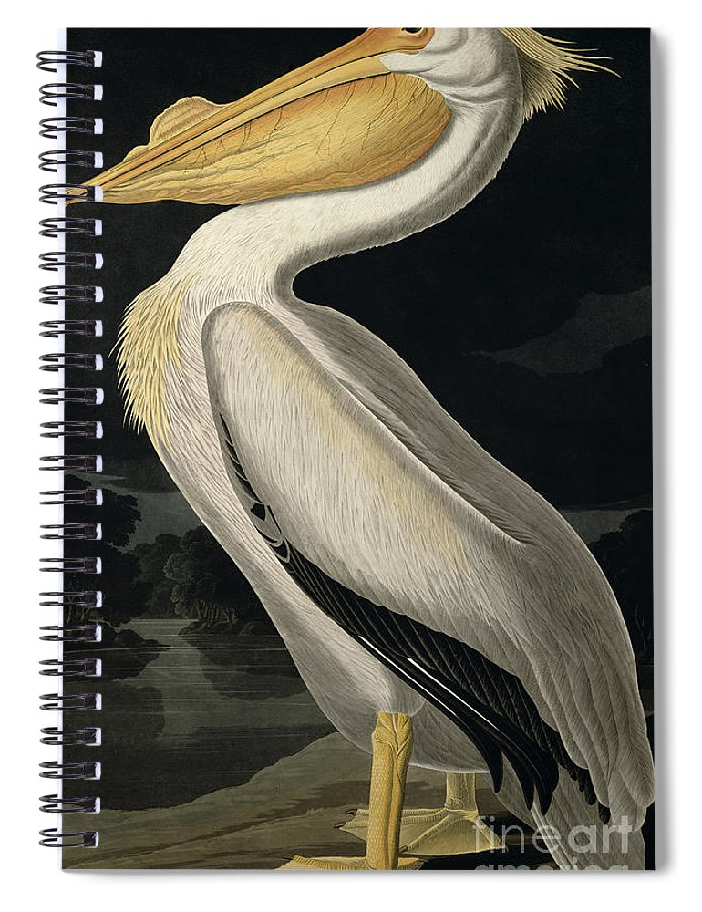 American White Pelican Spiral Notebook featuring the painting American White Pelican by John James Audubon