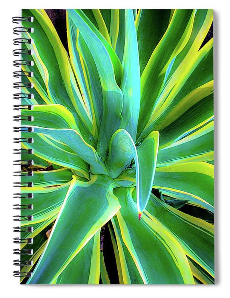 Agave Spiral Notebook featuring the photograph An Agave In Color by D Davila