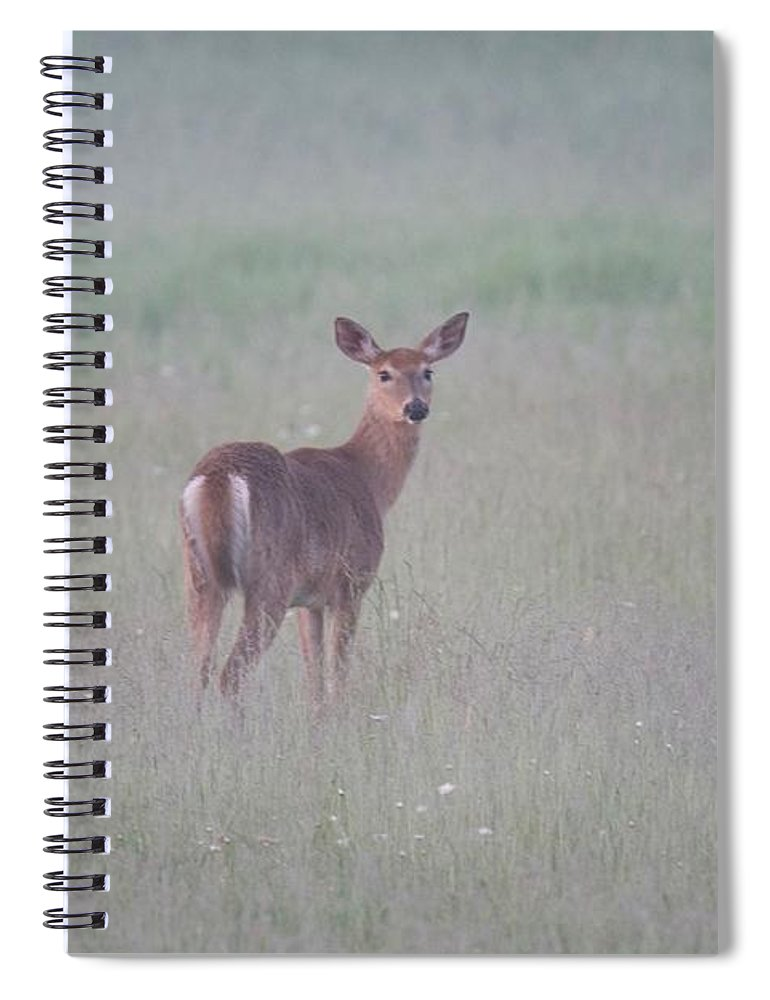 Deer Spiral Notebook featuring the photograph An Early Summer Morning by Michael Peychich