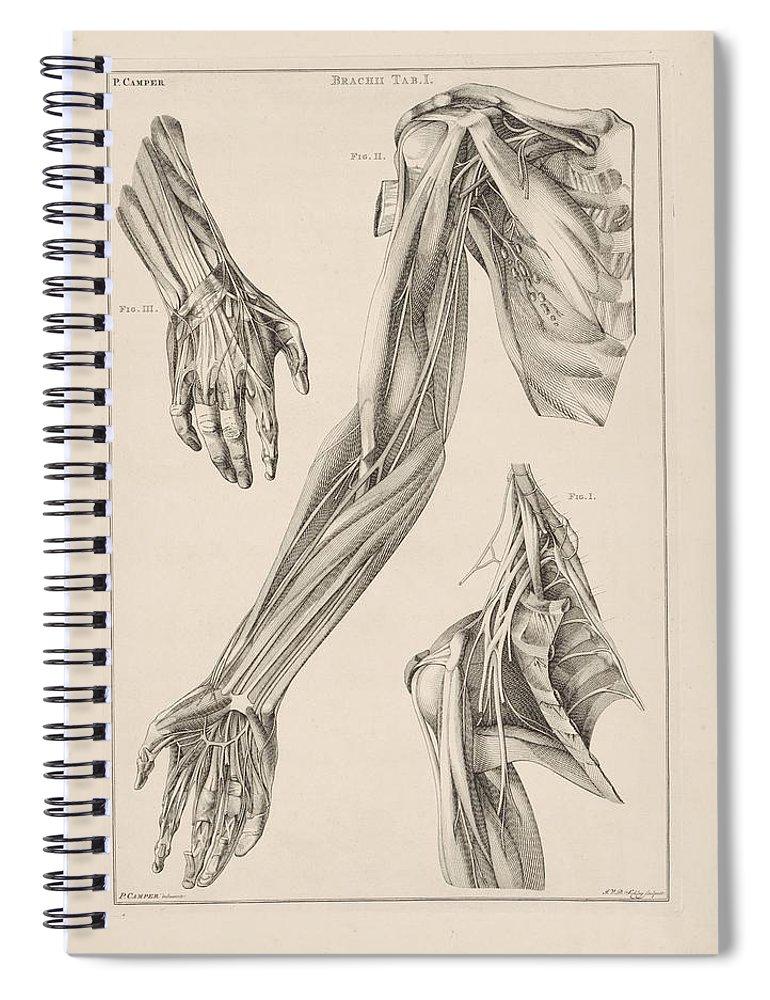 Anatomie Van De Arm De Hand En De Schouder Jacob Van Der Schley ...