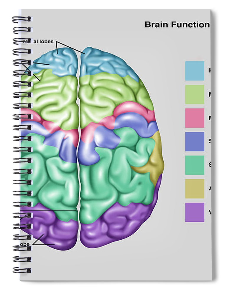Anatomy & Functions Of Brain Spiral Notebook for Sale by Gwen Shockey