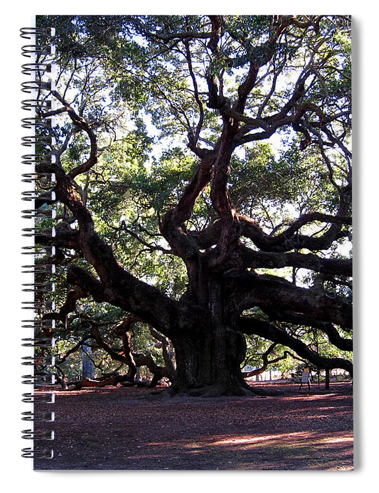 Photography Spiral Notebook featuring the photograph Angel Oak II by Susanne Van Hulst