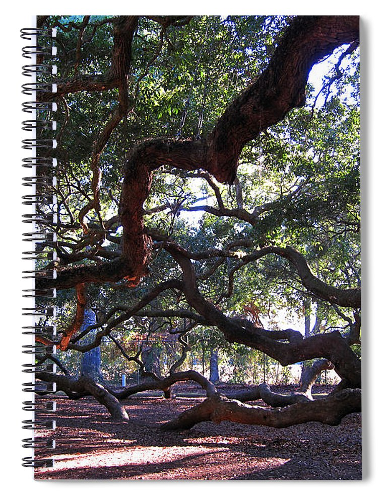 Photography Spiral Notebook featuring the photograph Angel Oak side view by Susanne Van Hulst