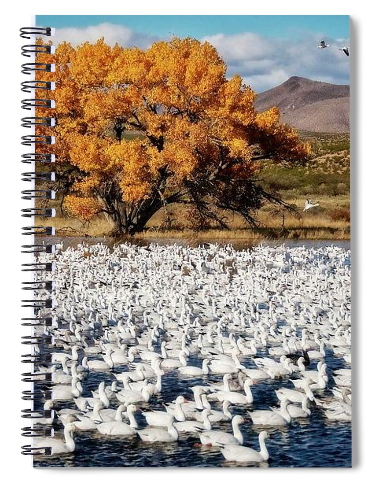 Nature Spiral Notebook featuring the photograph Annual Snow Geese Meet-up, Bosque Del Apache, New Mexico by Zayne Diamond Photographic
