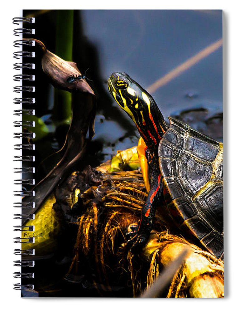 Turtles Spiral Notebook featuring the photograph Ant Meets Turtle by Bob Orsillo