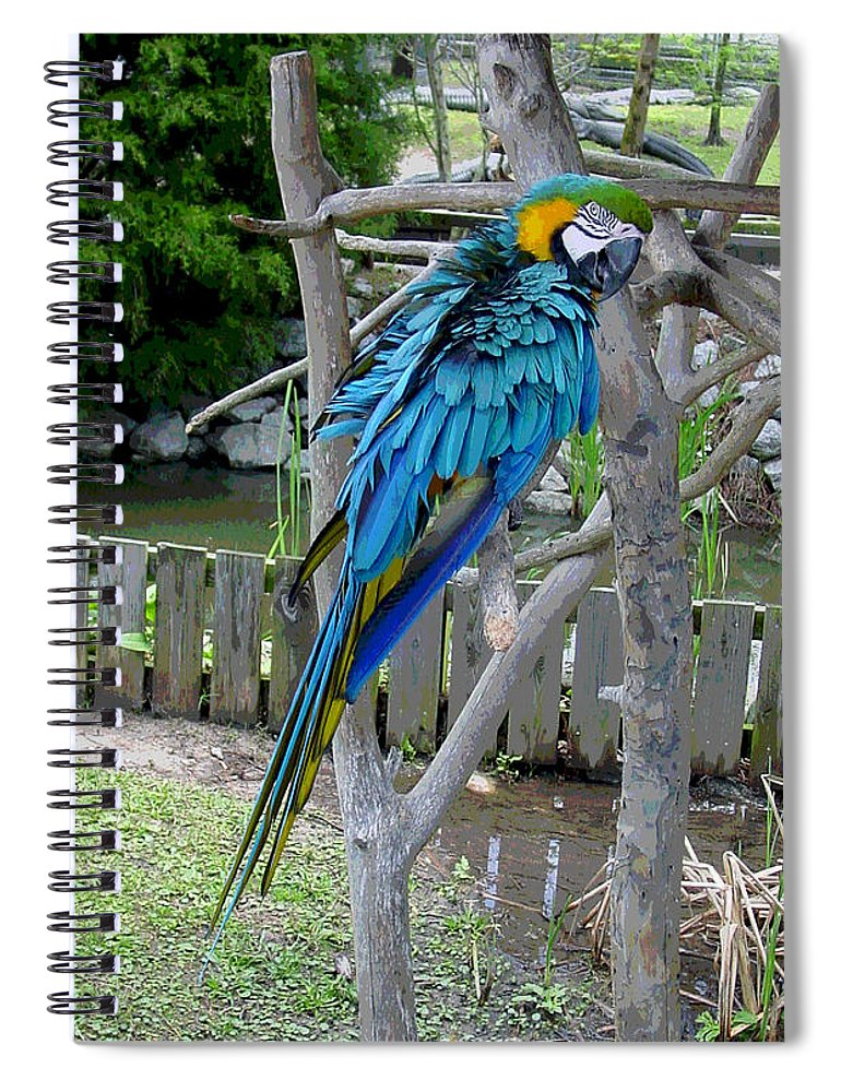 Blue Spiral Notebook featuring the photograph Arent I a Handsome Fellow - Blue and Gold Macaw by Suzanne Gaff