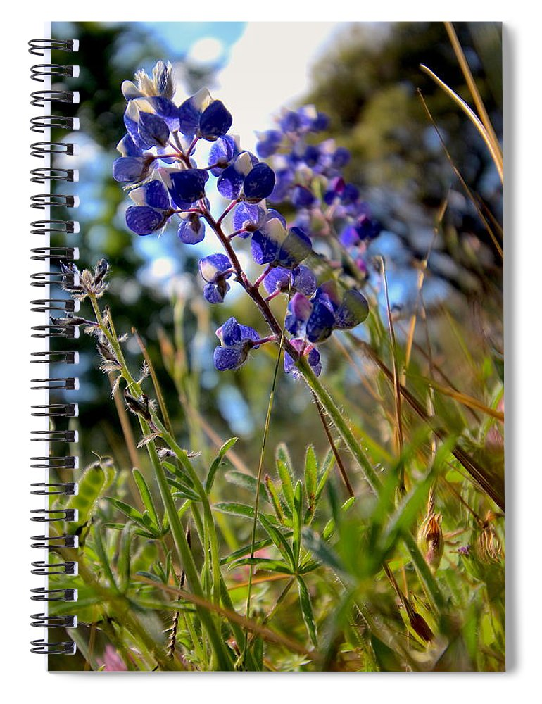T50yp Spiral Notebook featuring the photograph Arroyo Lupine Four by Nicholas Miller
