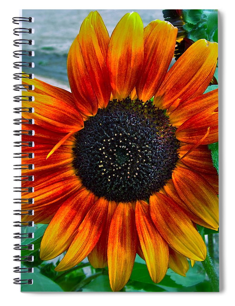 Sunflower Spiral Notebook featuring the photograph Autumn Blessing by Gwyn Newcombe