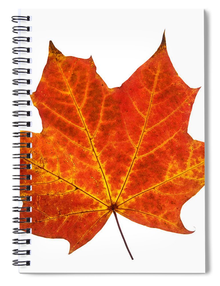 Single Autumn Leaf Spiral Notebook featuring the photograph Autumn Leaf 3 by Gill Billington