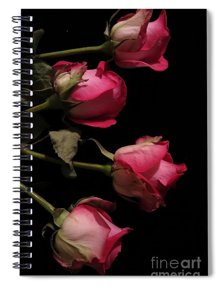 Floral Spiral Notebook featuring the photograph Beautiful Two Tone Roses 4 by Tara Shalton