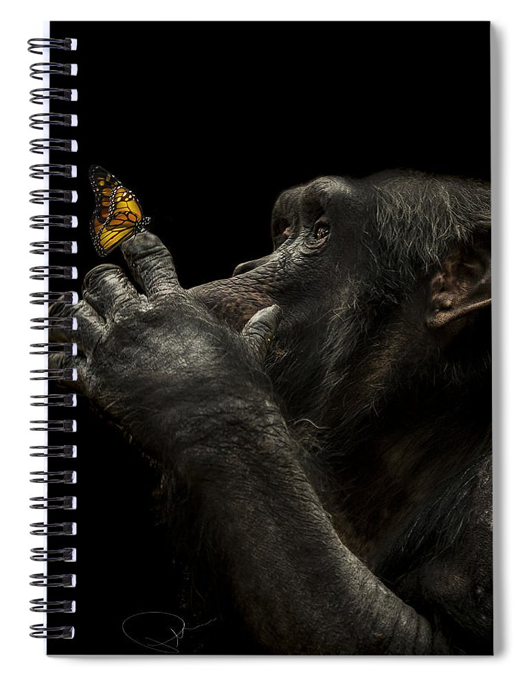 Chimpanzee Spiral Notebook featuring the photograph Beauty and the beast by Paul Neville
