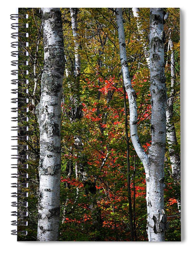 Birch Spiral Notebook featuring the photograph Birches by Elena Elisseeva