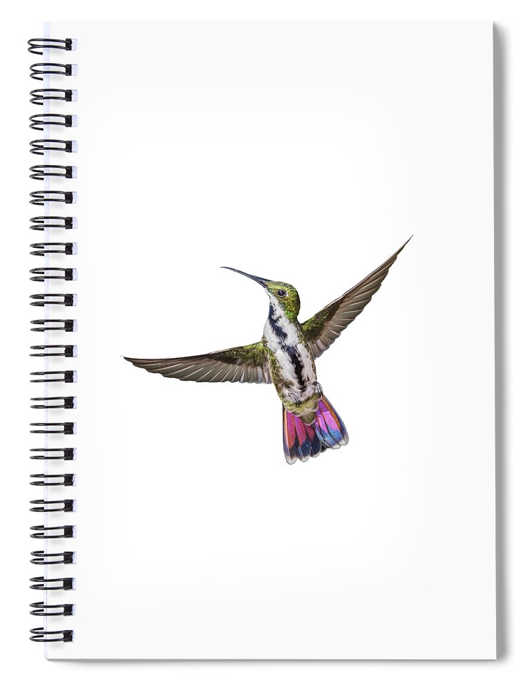 Hummingbird Spiral Notebook featuring the photograph Black Throated Mango by Rachel Lee Young