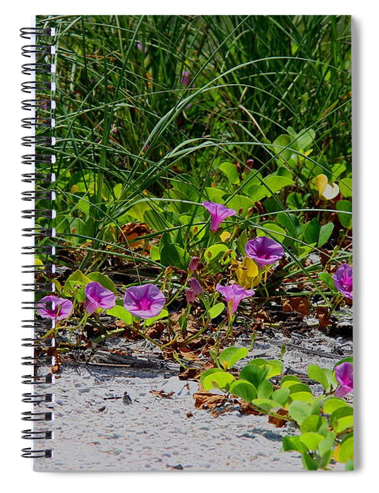 Cross Vines Spiral Notebook featuring the photograph Blooming Cross Vines Along The Beach by Barbara Bowen