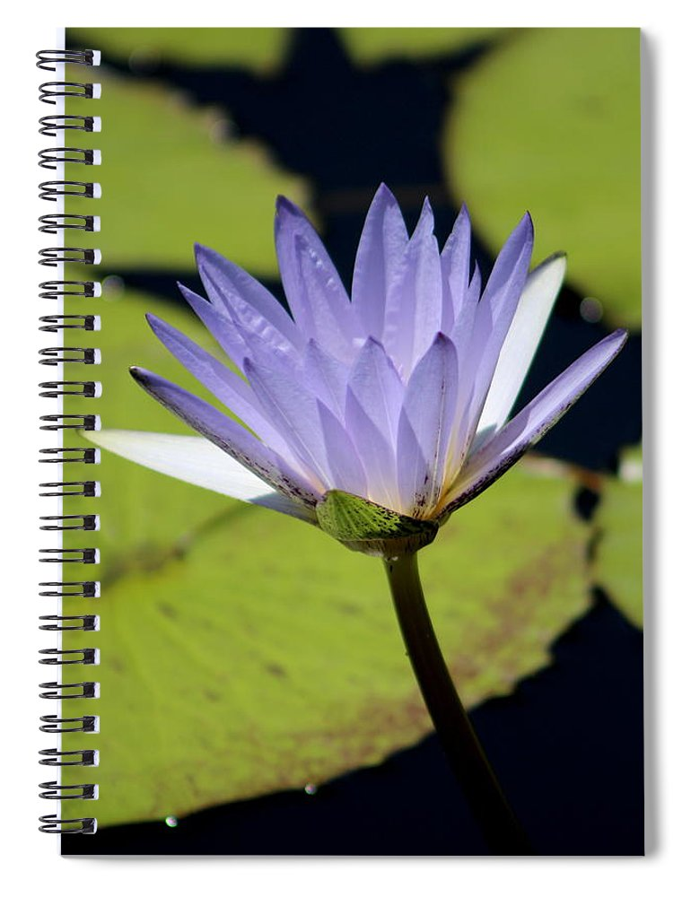Bright Jacaranda Blue Lotus Flower Notebook