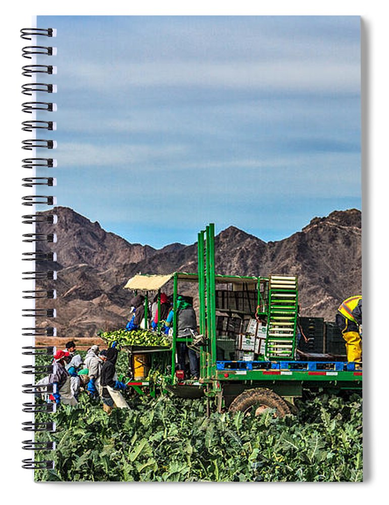 Healthy Spiral Notebook featuring the photograph Broccoli Harvest by Robert Bales