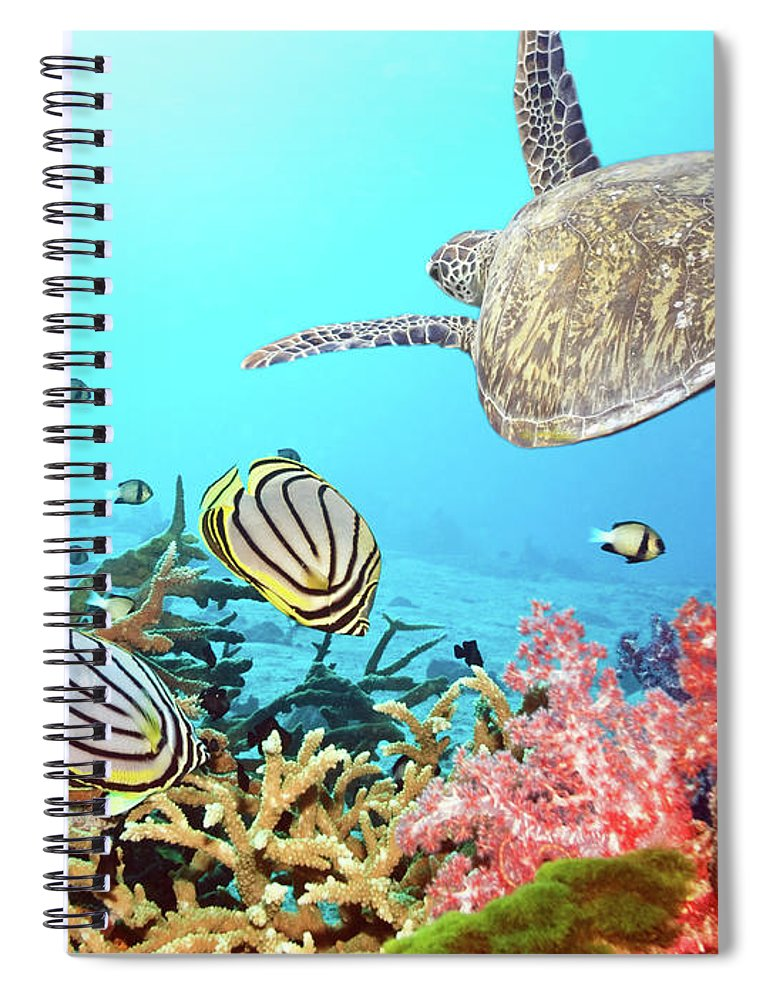 Butterflyfish Spiral Notebook featuring the photograph Butterflyfishes And Turtle by MotHaiBaPhoto Prints