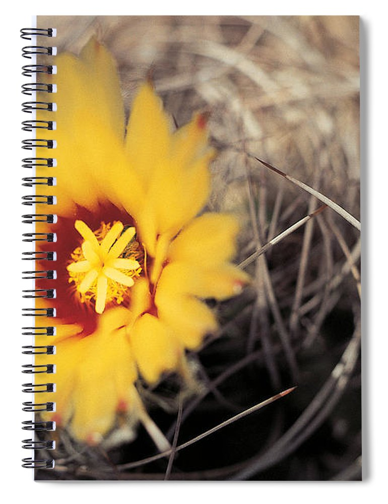 Cactus Flower Spiral Notebook For Sale By American School