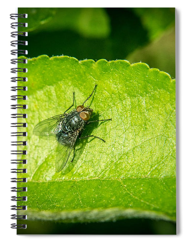 Calliphorid Spiral Notebook featuring the photograph Calliphorid Resting on Apple Leaf by Douglas Barnett