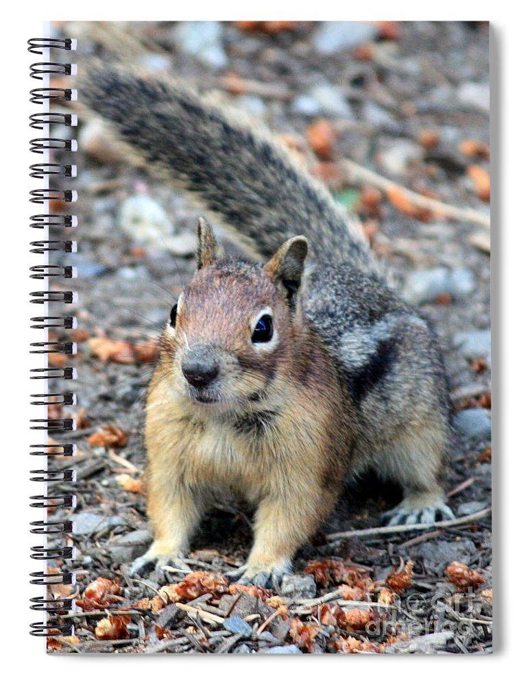 Chipmunk Spiral Notebook featuring the photograph Campground Chipmunk by Carol Groenen