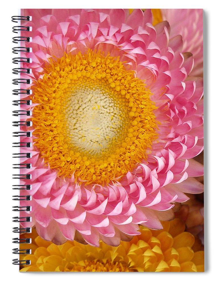 Flower Spiral Notebook featuring the photograph Carmel Flower by Sarah Madsen