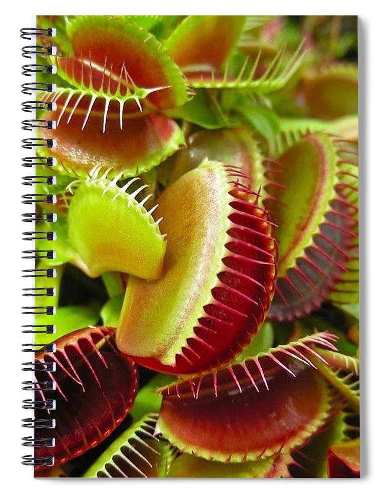 Nature Spiral Notebook featuring the photograph Carnivores by Hoang Bui