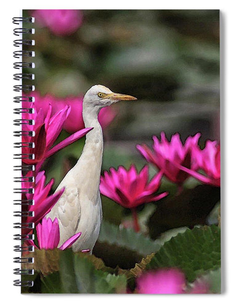 Bird Spiral Notebook featuring the digital art Cattle Egret amongst Waterlilies by Sandeep Gangadharan
