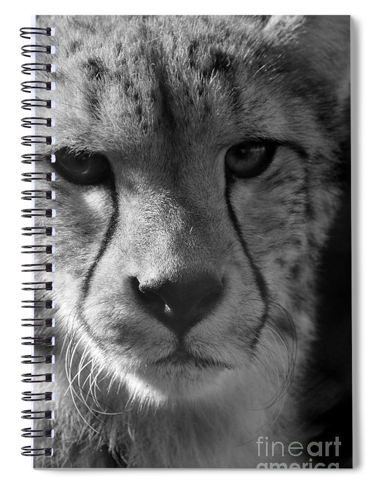 Cheetah Spiral Notebook featuring the photograph Cheetah Black And White by Karen Adams