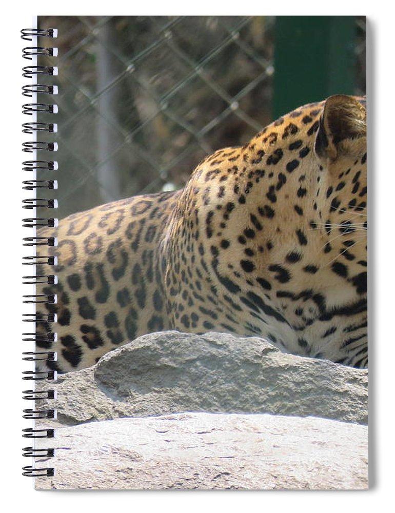 Leopard Spiral Notebook featuring the photograph Cheetah by Utpal Datta