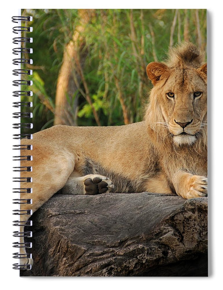 Lion Spiral Notebook featuring the photograph Classic Young Male by Steven Sparks