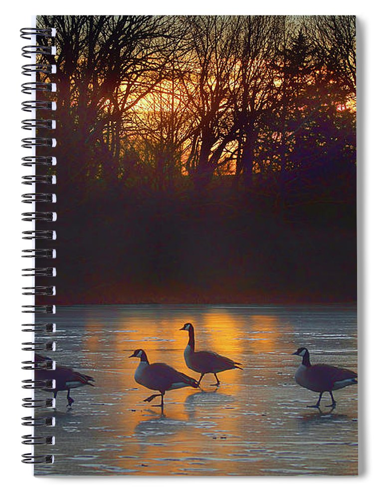 Canada Geese Spiral Notebook featuring the photograph Cold Feet by Nikolyn McDonald