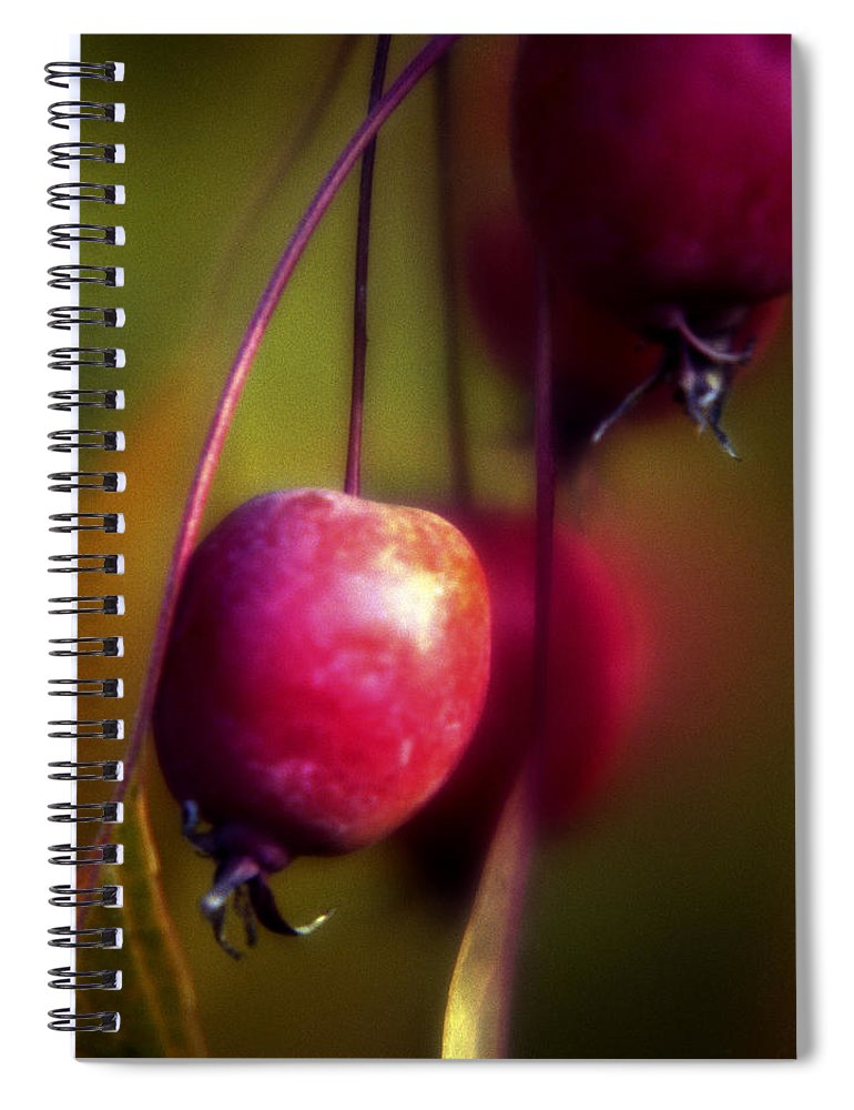 Macro Spiral Notebook featuring the photograph Crabapple by Lee Santa